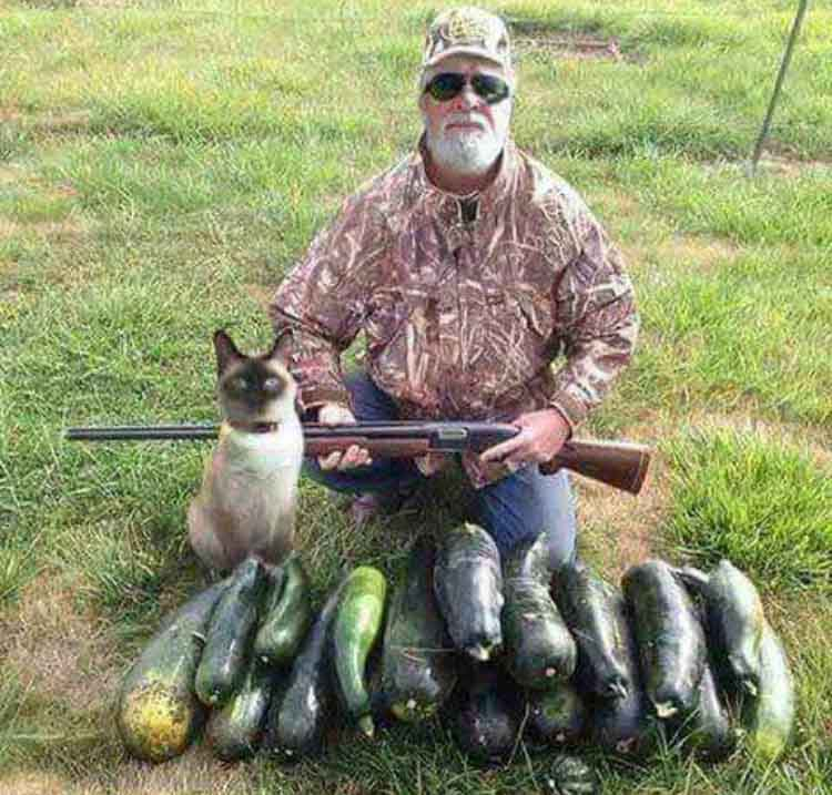 Zucchini hunting season